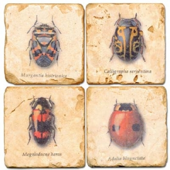 Marble Coasters, set of 4, illustration theme Bugs, antique finish, cork backed, l 10 x w 10 x h 1 cm