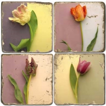Marble Coasters, set of 4, illustration theme Tulips, antique finish, cork backed, l 10 x w 10 x h 1 cm