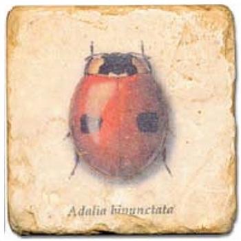 Marmorfliese, Motiv: Käfer C,  Antikfinish,  Aufhängeöse, Antirutschfüßchen, Maße: L 20 x B 20 x H 1 cm