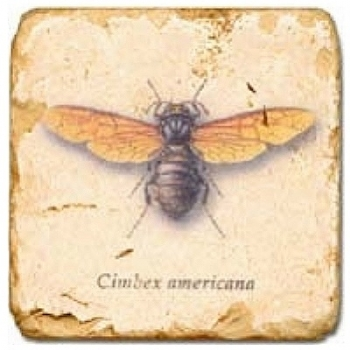 Marble Tile, Theme: Winged Insects 1 B, antique finish, hanger, anti slip nubs, Dim.: l 20 x w 20 x h 1 cm