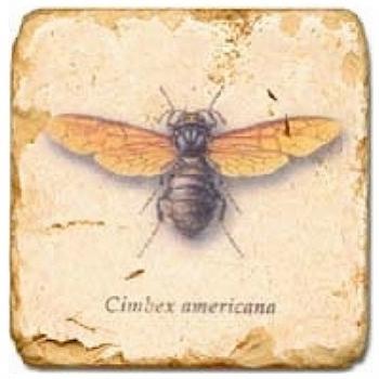 Carrelage en marbre, motif insecte 1B, finition antique, illet pour l'accroche, pieds antidérapants, L 20 xl 20 x h 1 cm