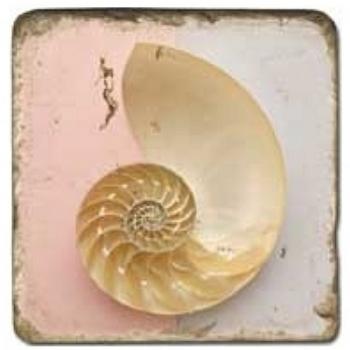 Marble Tile, Theme: Clam Shells 2 A, antique finish, hanger, anti slip nubs, Dim.: l 20 x w 20 x h 1 cm