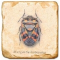 Carrelage en marbre, motif coléoptère A, finition antique, illet pour l'accroche, pieds antidérapants, L 20 xl 20 x h 1 cm