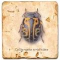 Carrelage en marbre, motif coléoptère B, finition antique, illet pour l'accroche, pieds antidérapants, L 20 xl 20 x h 1 cm