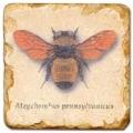 Marmorfliese, Motiv: Flügelinsekten 1 A,  Antikfinish,  Aufhängeöse, Antirutschf., Maße: L 20 x B 20 x H 1 cm
