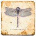 Marmorfliese, Motiv: Flügelinsekten 1 C,  Antikfinish,  Aufhängeöse, Antirutschf., Maße: L 20 x B 20 x H 1 cm
