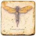 Marmorfliese, Motiv: Flügelinsekten 1 D,  Antikfinish,  Aufhängeöse, Antirutschf., Maße: L 20 x B 20 x H 1 cm