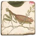 Marmorfliese, Motiv: Flügelinsekten 2 C,  Antikfinish,  Aufhängeöse, Antirutschf., Maße: L 20 x B 20 x H 1 cm