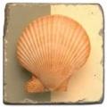 Marmorfliese, Motiv: Muscheln 2 D,  Antikfinish,  Aufhängeöse, Antirutschfüßchen., Maße: L 20 x B 20 x H 1 cm
