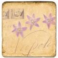 Marmorfliese, Motiv: Blütenbriefe 1 B,  Antikfinish,  Aufhängeöse, Antirutschfüßchen, Maße: L 20 x B 20 x H 1 cm